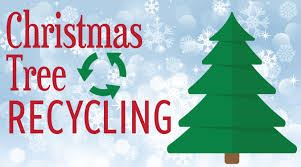 christmas-tree-recycling-image